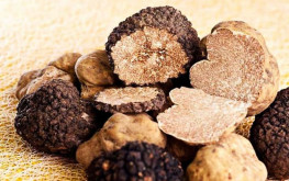 Besides those from Alba and Piedmont in Italy, and Provence in France, truffles from Istria are among the most highly appreciated in the world. The best Istrian truffles can be found in the Motovun Forest in central Istria.